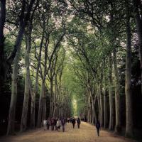Chenonceau Forest, Chenonceau. © Jin Jun
