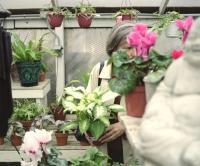 Mom Plants