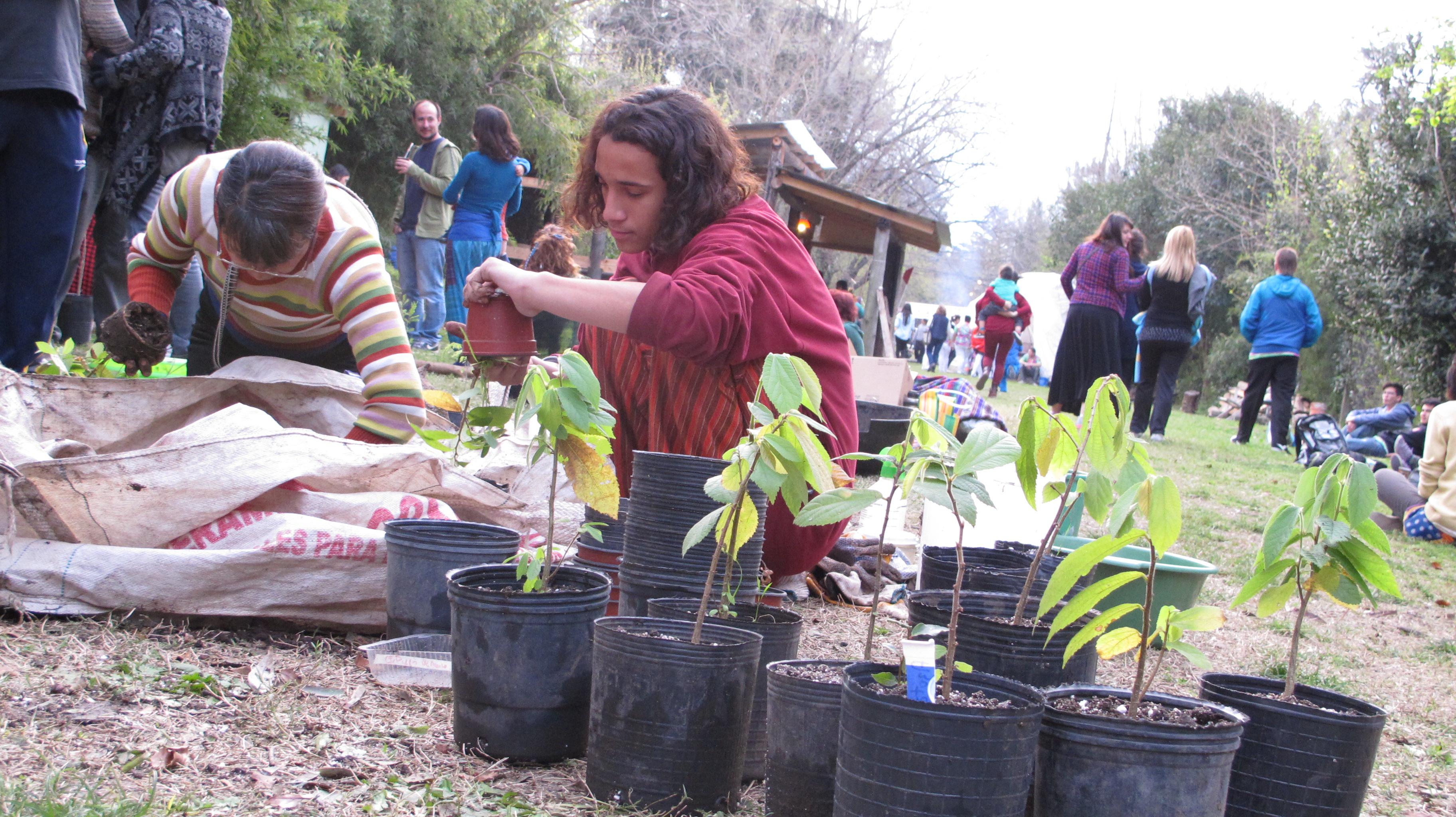 Un árbol para mi vereda: Un adolescente transplanta plantines de Azota Caballos en un encuentro de trabajo voluntario en un vivero comunitario en San Miguel.