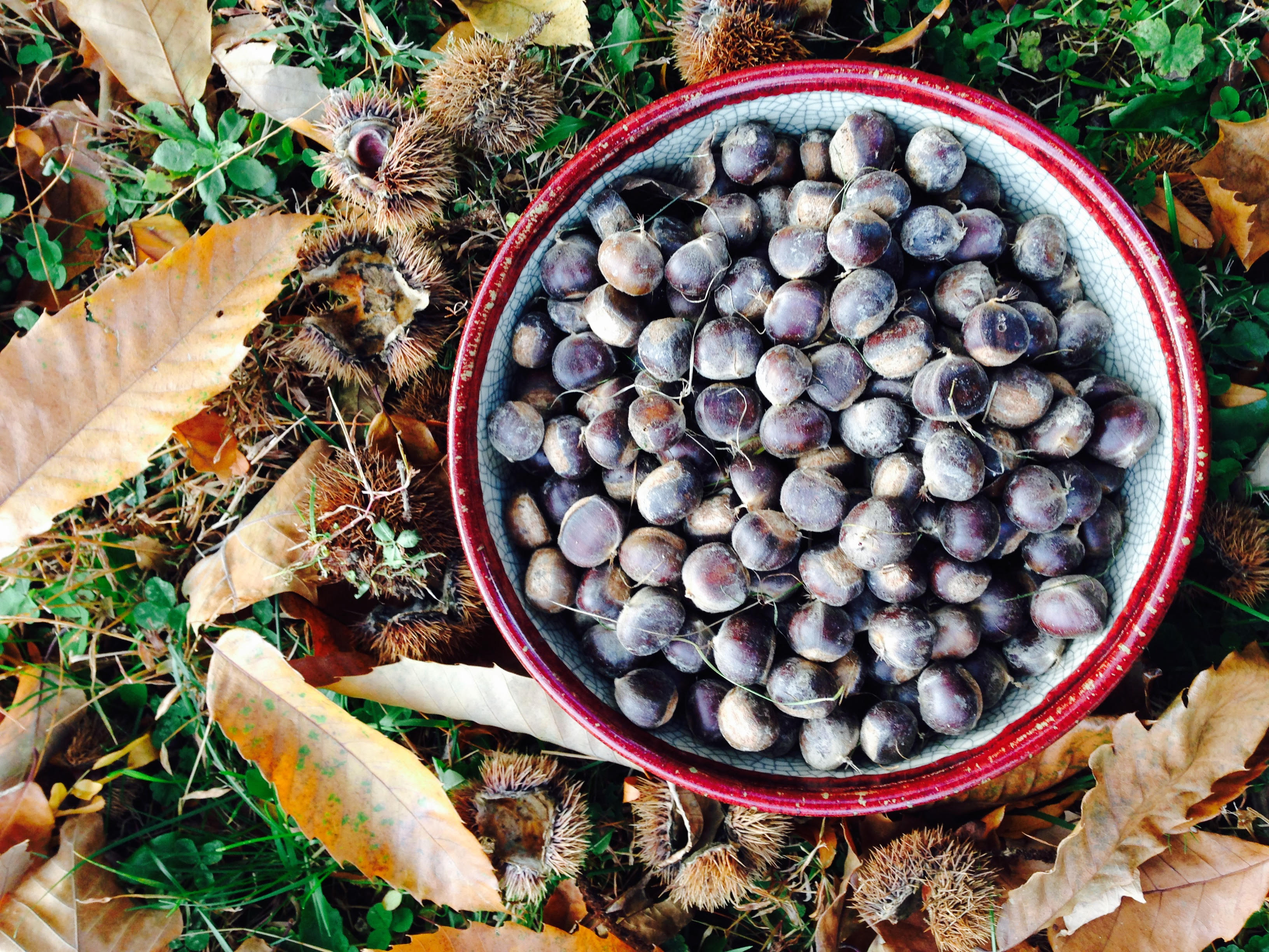 Castañas recién cosechadas y peladas, foto de Antonia Pérez