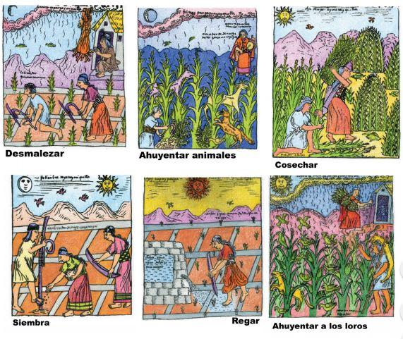 Mira los dibujos de Poma de Ayala, ¿a qué meses corresponde cada trabajo?